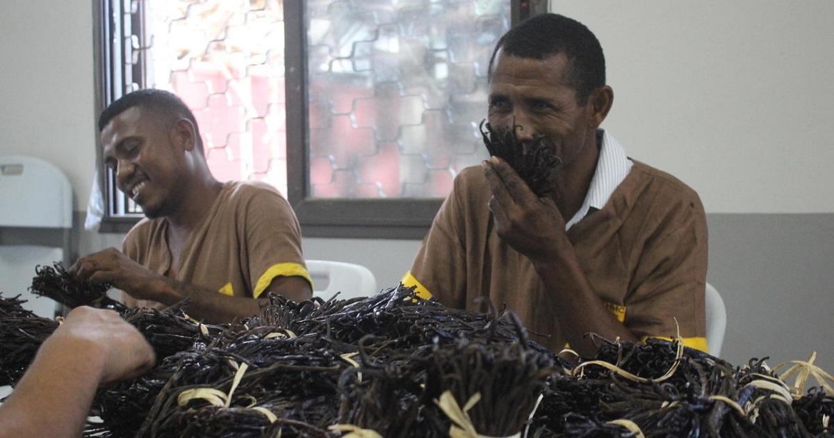 Madagascar : le gouvernement maintient le prix plancher de la vanille à 250 dollars le kilo