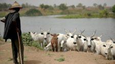 11 morts dans les affrontements au Tchad entre éleveurs et agriculteurs