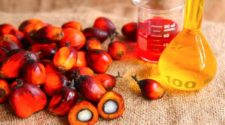 The palm oil in Senegal is on the rise