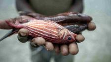 Economie: le secteur halieutique à Madagascar perd plus de 80 millions de dollars