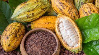 Chute du prix du cacao ivoirien pour les planteurs